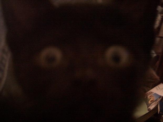 mow kitten